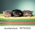 Stock photo three sleeping scottish baby kitten on stack of colorful towels 99793535