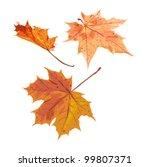 Set Of Three Different Autumn...