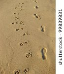 Human And Dog Footprints In...