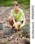 Woman  harvesting potatoes in field - stock photo