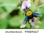 Carpenter Bee Macro In The...