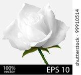 Stock vector white rose flower photo realistic mesh vector illustration 99910514