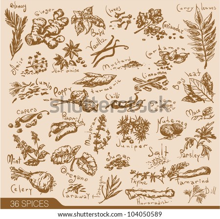 hand drawn spices and herbs