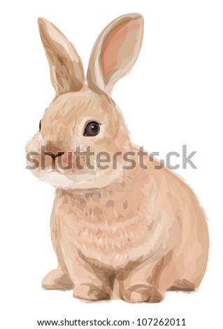 vector of cute rabbit isolated