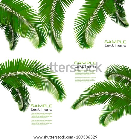 set of palm leaves on white