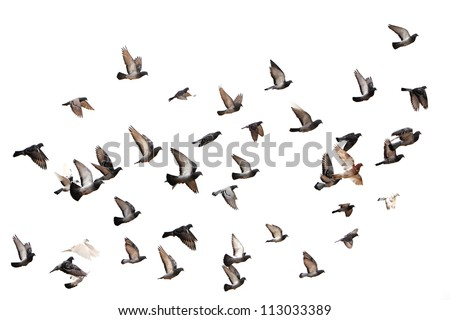 stock-photo-flying-pigeons