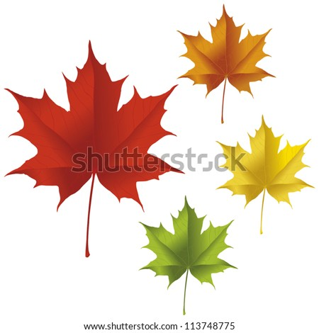 a maple leaf in red  yellow