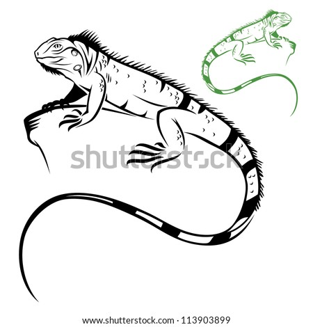 isolated iguana   vector