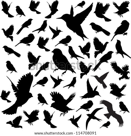 set birdsvector illustration