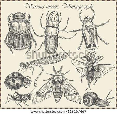 vector set insects in vintage