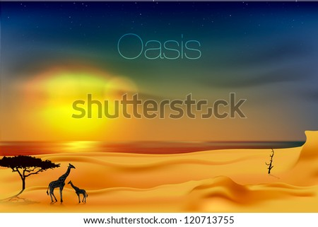beautiful sunset at the oasis