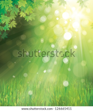 vector of green leaves on sunny