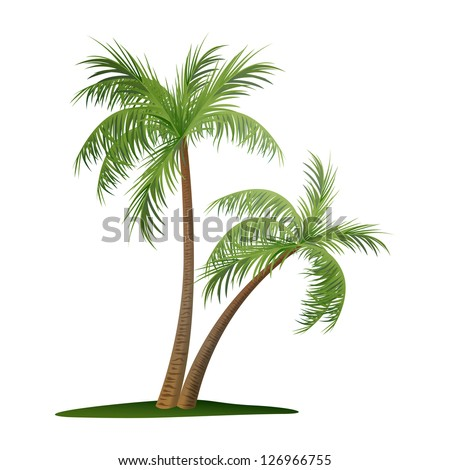 vector illustration of two palm