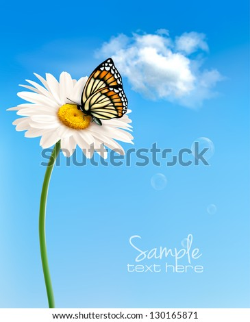 nature spring daisy flower with