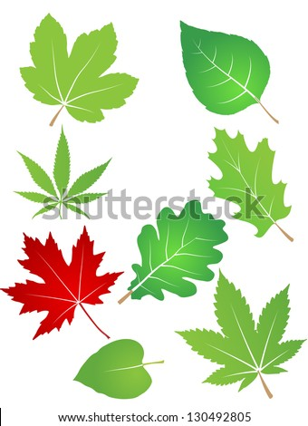 isolated leaves illustration