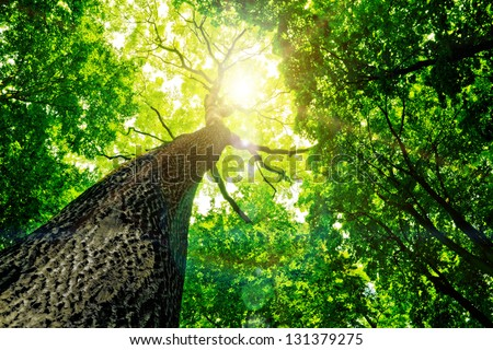 nature red tree background free stock photos download 35 894 free