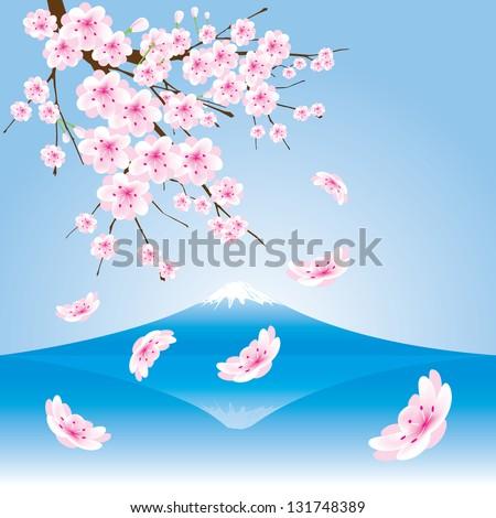 fuji mountain  and cherry