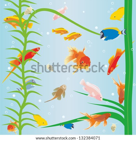 fish in the aquarium