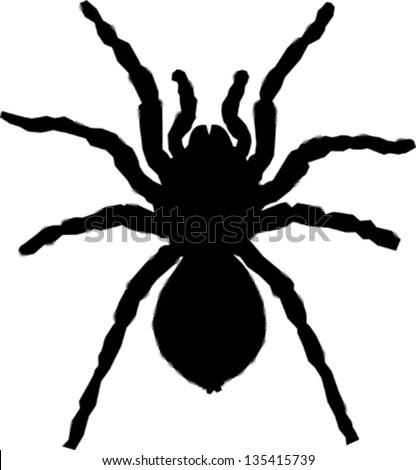 tarantula silhouette