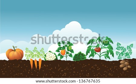 vegetable garden eps 10 vector