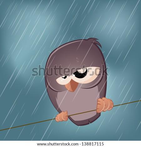 sad bird on a rainy day