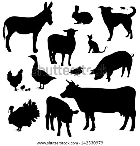 farm animals on a white
