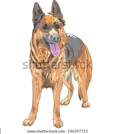 vector portrait of a dog german
