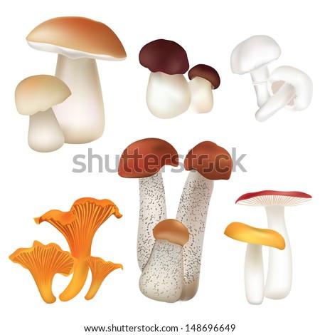 mushroom icons set boletus