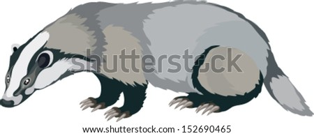 badger in vector art