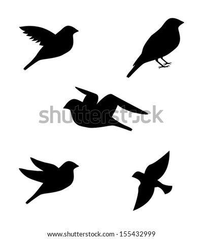 birds pattern over white
