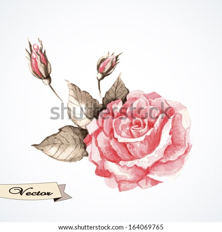 vector rose watercolor vector