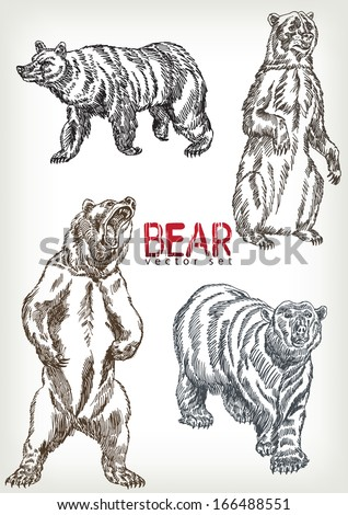 hand drawn bear vector set