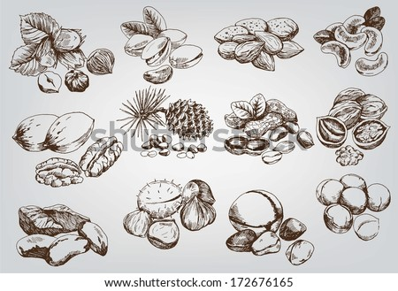 hazelnuts set of vector