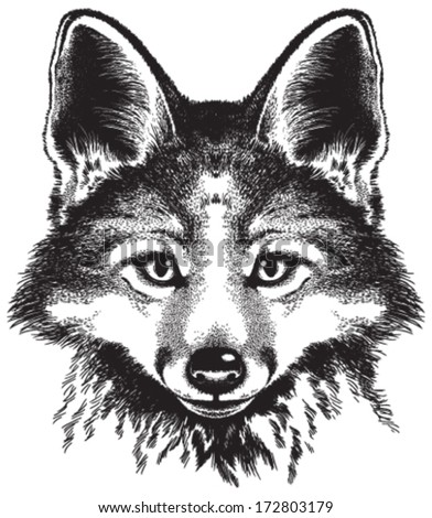 vector sketch of a red fox's