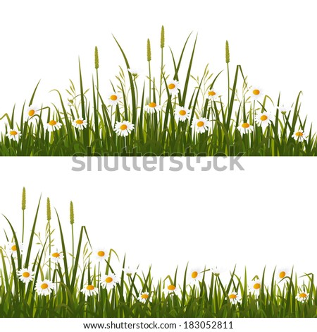 wild flower meadow  isolated on