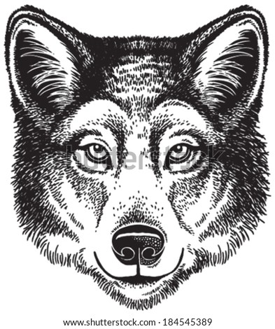 wolf face  vector sketch