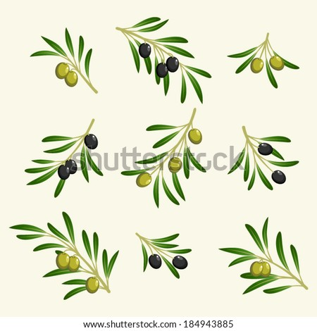 vector collection of olive