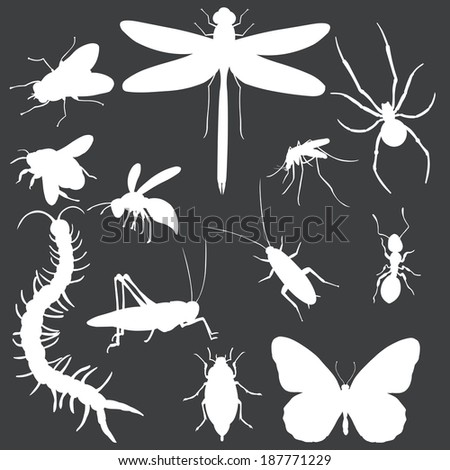 vector set of white insects