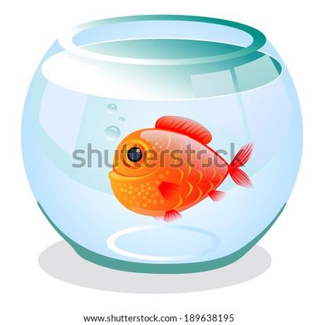 cute goldfish in the aquarium