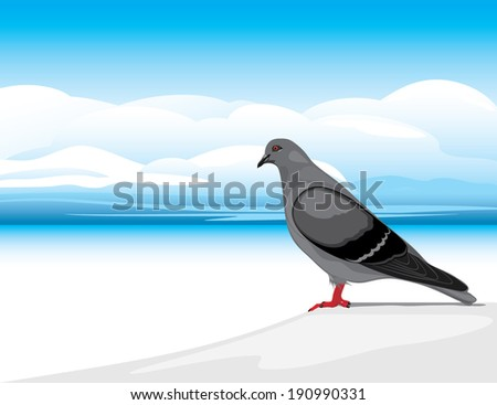 gray dove on a skyscape