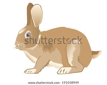 brown nice hare vector