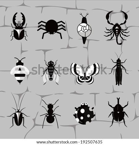 insect world in black and white