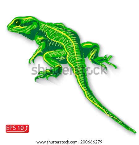 green lizard dragon on a white