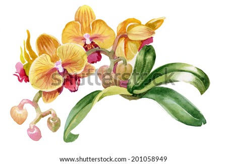 watercolor colorful orchid