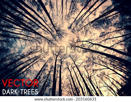 deep forest vector background