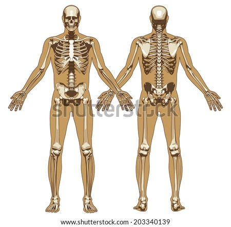 human skeleton on flat body