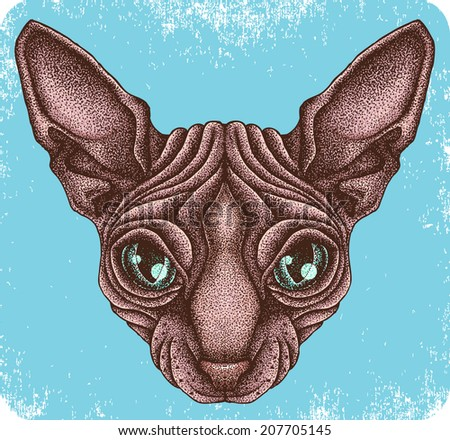 hand drawn sphynx cat