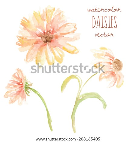 watercolor daisy vector flowers