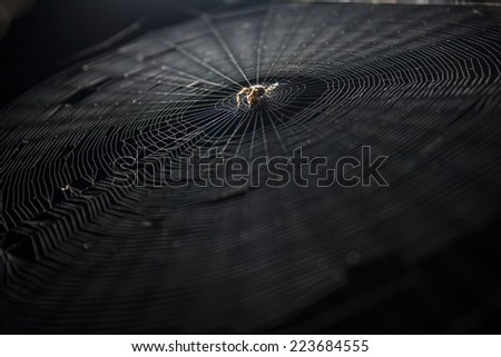 spider web on black background