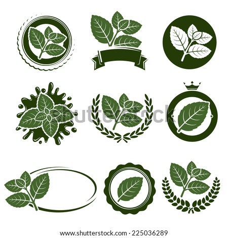 mint leaves label set vector